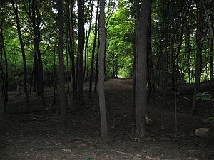 Bruce Trail, Niagara Escarpment, Dundurn Stree...