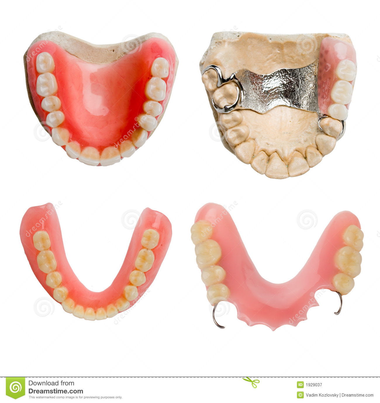full size dental prosthesis collection 1929037