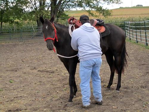 training_saddle_on