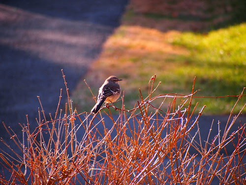 A bird in winter