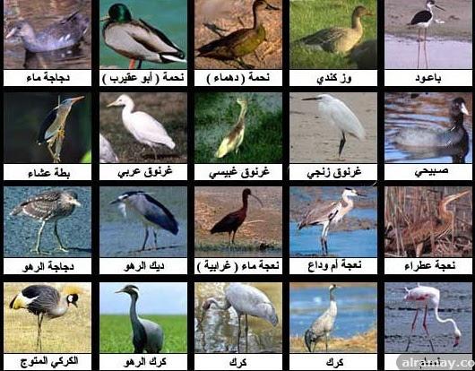 كلمة السر اسم طائر مكون من عشر حروف