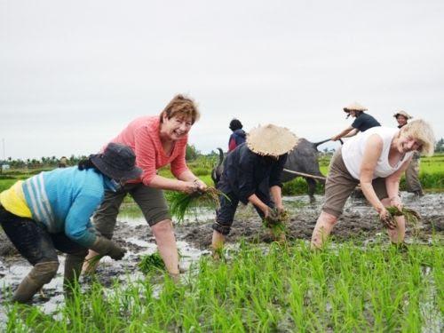 Du lịch nông nghiệp cần giải pháp phát triển bền vững