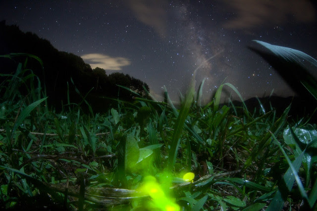 Firefly which looks at Milky Way