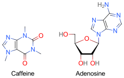 Two skeletal formulas: left  caffeine, right  adenosine.