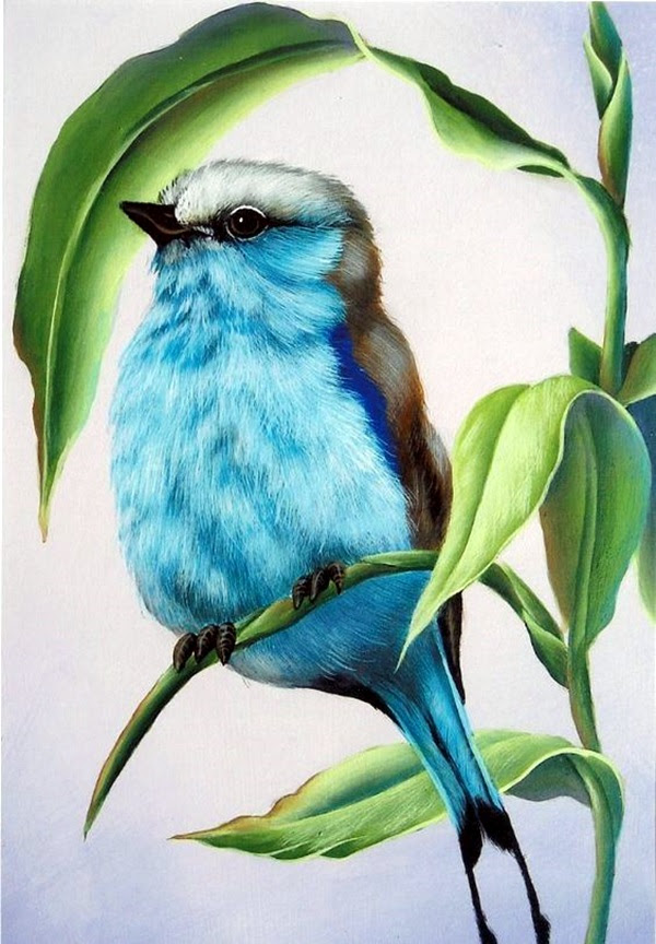 color pencil drawing Examples (43)