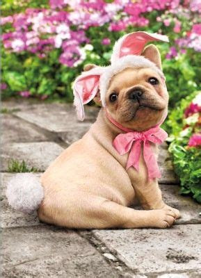 funny puppys  french  pinterest