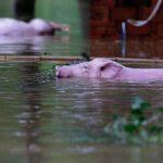 7/3/16 Flooding Near Wuhan, China