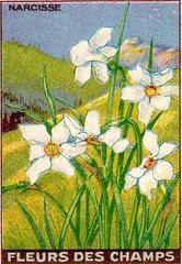 fleurs des champs 11