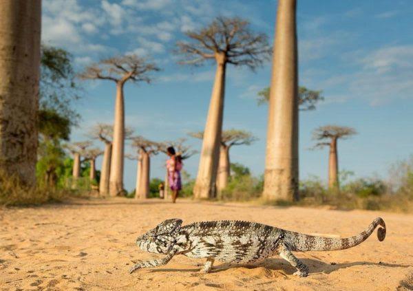 [O camaleão] É um animal doméstico de um menino pequeno (Foto: Ondrej Zaruba)