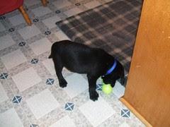 Jake playing