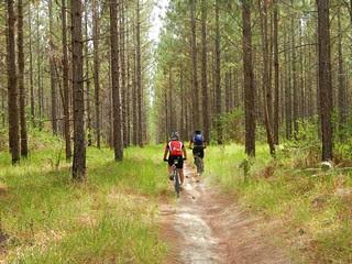 Beerburrum East State Forest