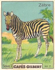 gilb zebre