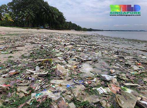 Marine debris on Pasir Ris shore