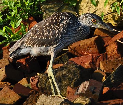 Bird on Bricks