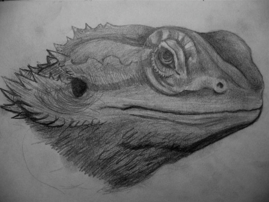 bearded_dragon_sketch_by_astistults d5ktpel