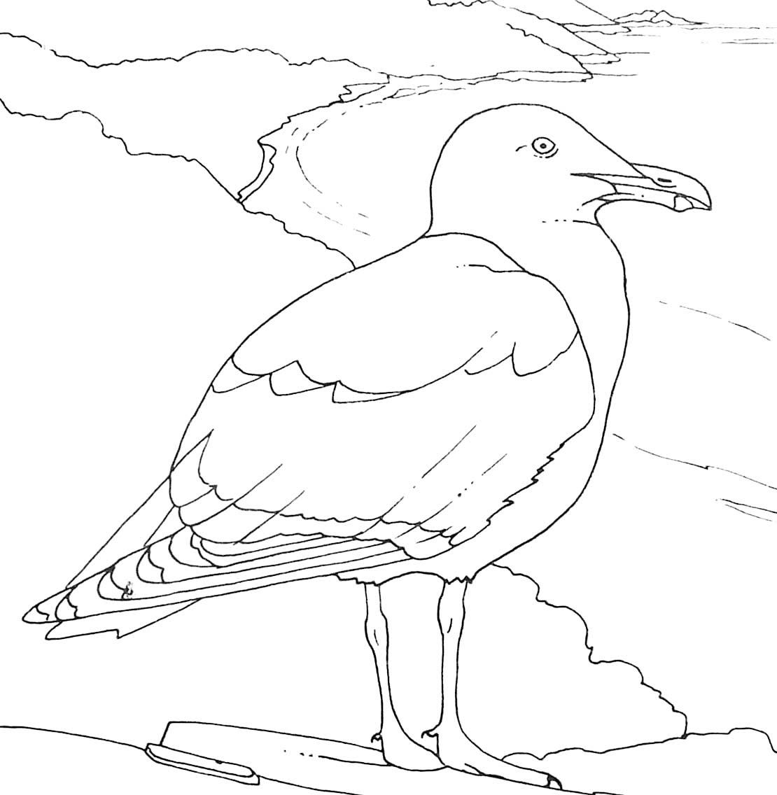 Coloriage d oiseau goéland argenté