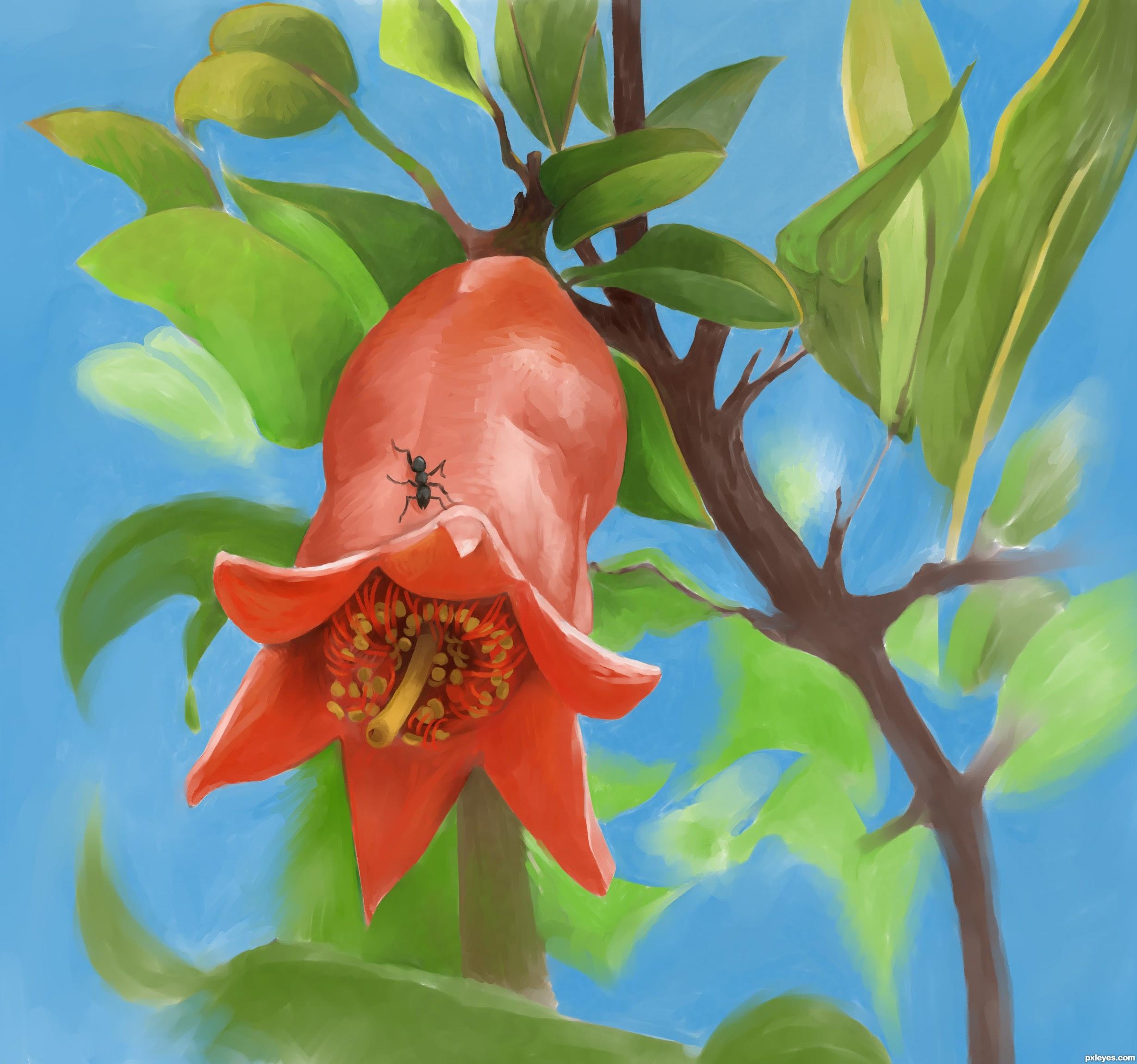 Image result for ant on pomegranate flower