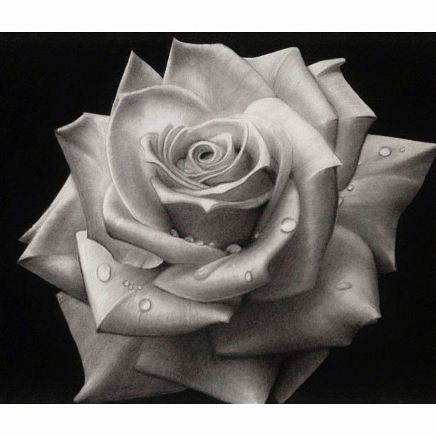 Black And White Rose Art Drawing Sketch Pencil Art Clip Art