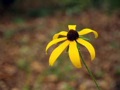 Yellow Flower, again....