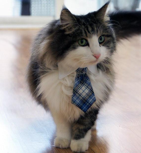Pet Dog Cat Collar ACCESSORY Necktie - fingerstory