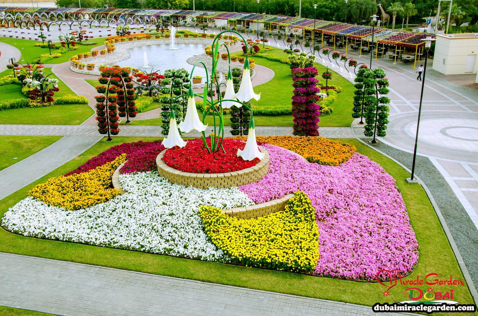 Dubai Miracle Garden 30
