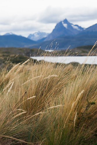GrassIsland1315.jpg