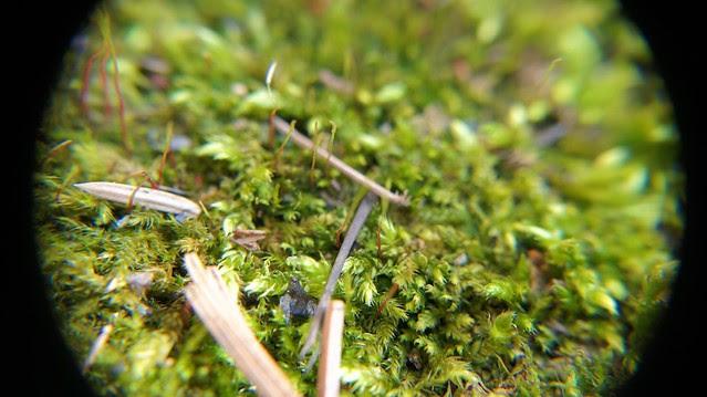 anteketborka.blogspot.com, macrojardin3