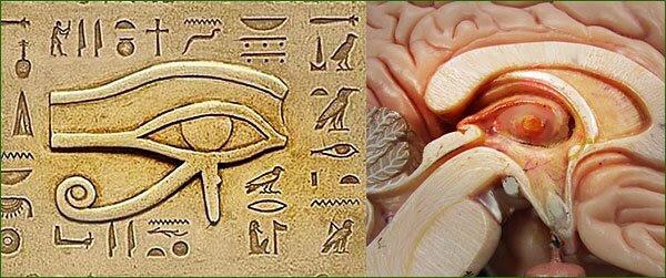 SP201_oeil-horus-et-glande-pineale