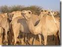 SOMALIA 235