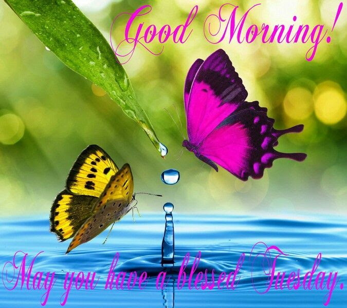 Good Morning Have A Blessed Tuesday Pictures Photos And Images For