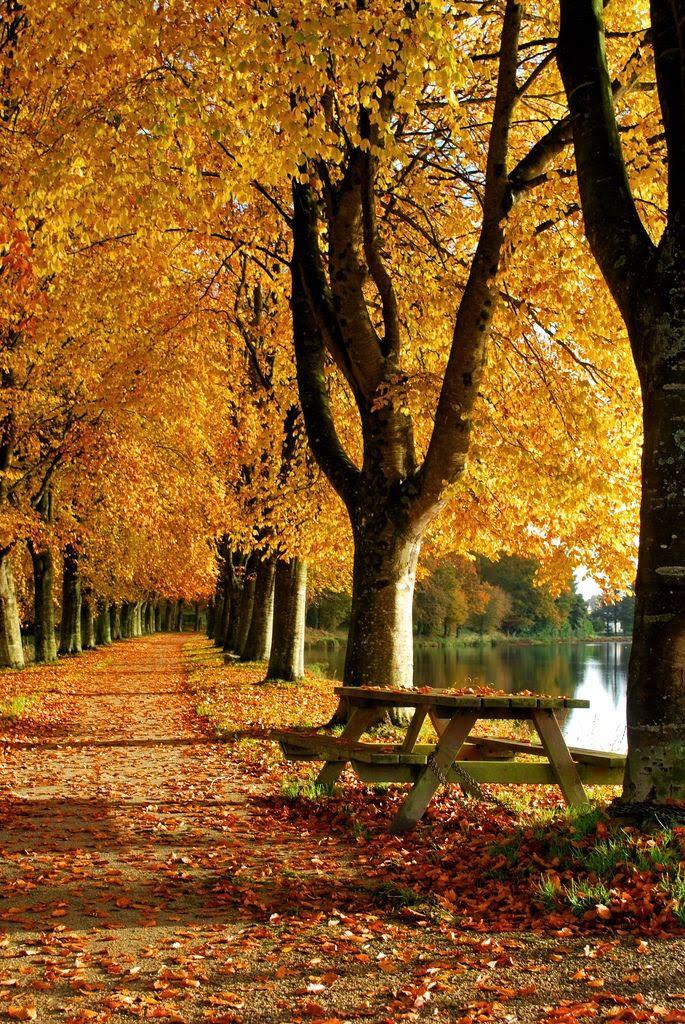 Un magnifique matin d'automne en Bretagne près de Loudéac | by Monsieur Nounou, via Flickr