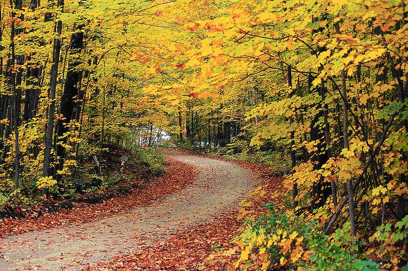 File:Hapgood Pond - Flickr - USDAgov.jpg