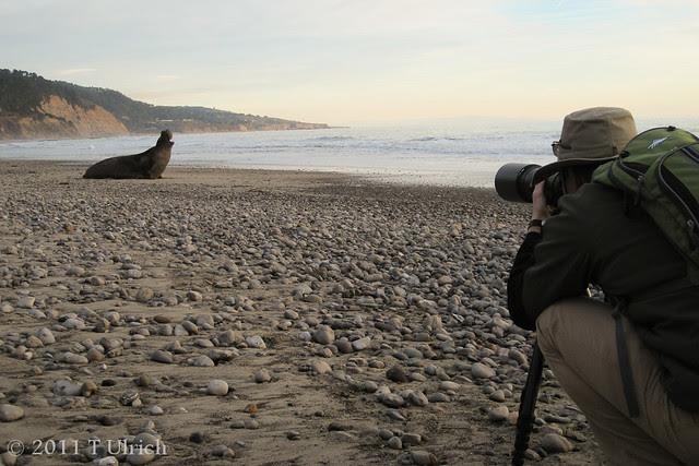 Elephant seal making of