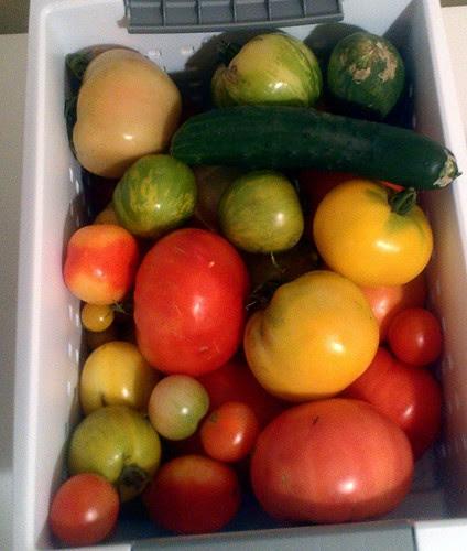 Hump Day Harvest