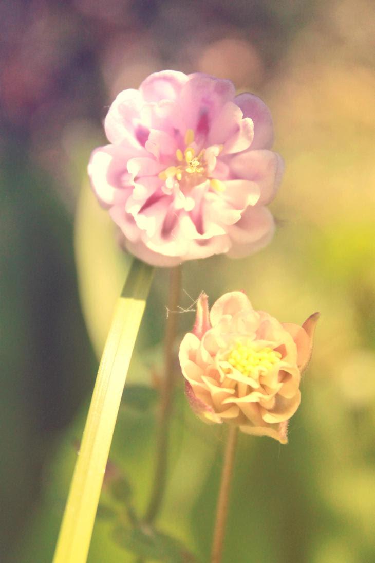 http://th06.deviantart.net/fs70/PRE/i/2012/142/d/8/flower_by_lexandra13-d50olkx.jpg
