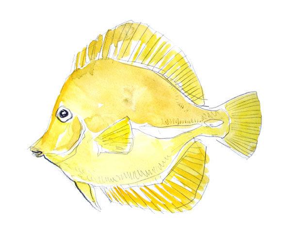 poisson_jaune