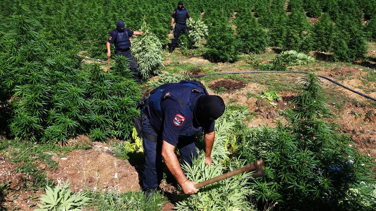 http://im1.7job.gr/sites/default/files/imagecache/1200x675/article/2017/01/217876-cannabis.jpg