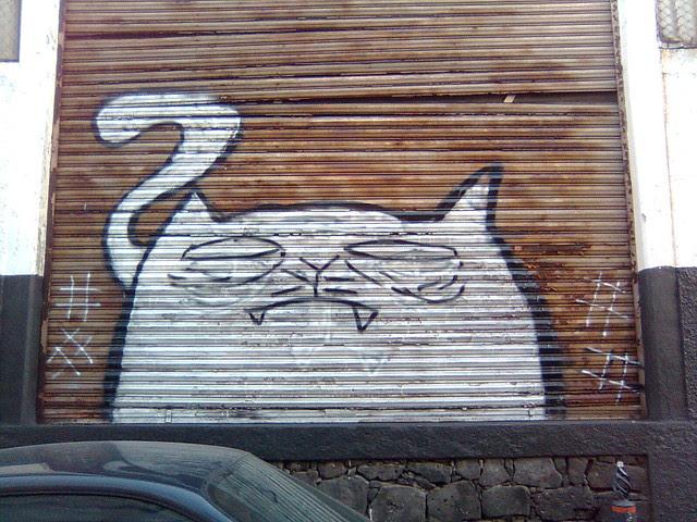 # - El Gato