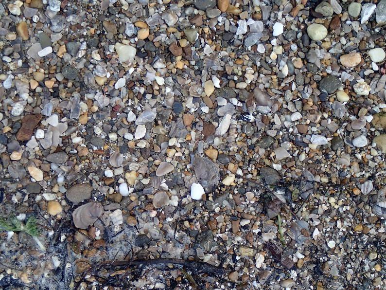 Finding Sea Glass Myrtle Beach