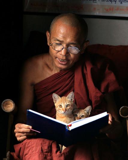 Коты буддийского монаха. Фото