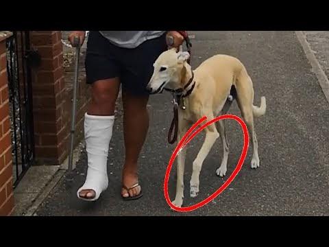 Perro imita caminar cojeando como su dueño herido por simpatía