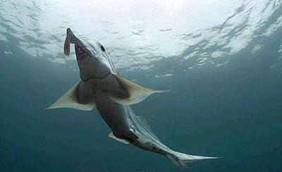 10 حقائق مذهلة عن أسماك القرش
