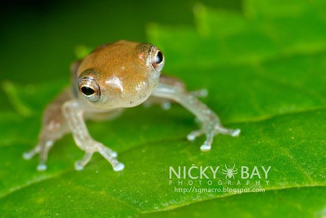 Frog (Anura) - DSC_8848