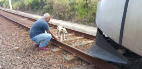 Um agente de segurança da CBTU foi chamado para resgatar o animal, que foi solto numa mata próxima / Foto: Divulgação / Facebook