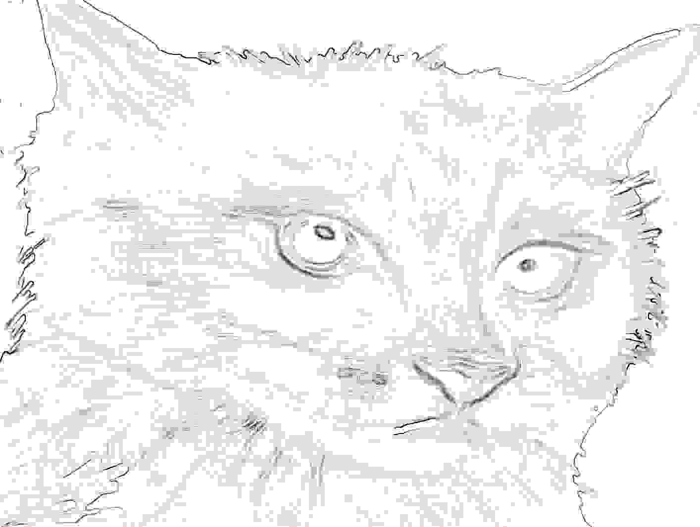 Katzenbild zum ausmalen