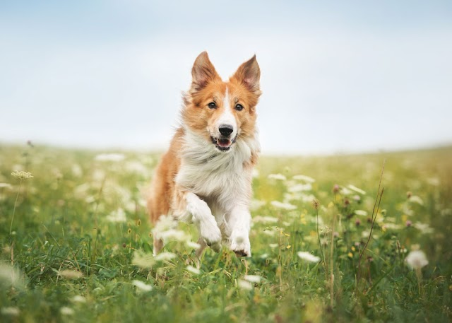 Creating the Perfect Garden for You and Your Dog
