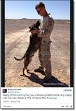 photo Militarycelebratesnationaldogday-8_zps577d6162.jpg