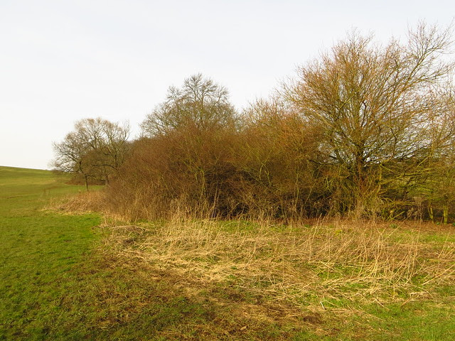 The Second Hedge