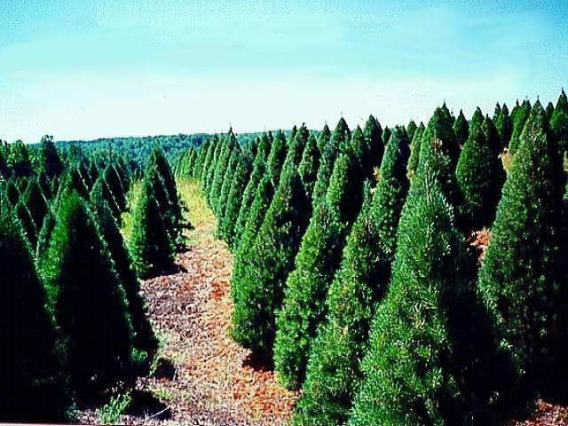 JeromeProphet: Helsel's Frosty's Trees