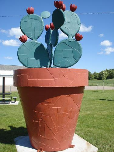 Giant Cactus Plant